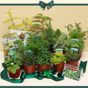 Christmas Culinary Herb Plant Collection