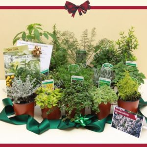 Christmas Herb Plant Collection